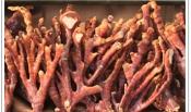녹각영지버섯